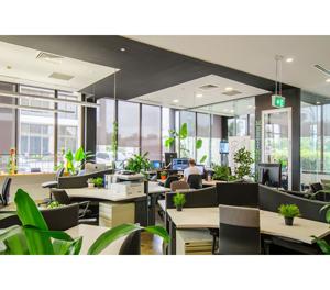 cây xanh văn phòng quan trọng như thế nào?